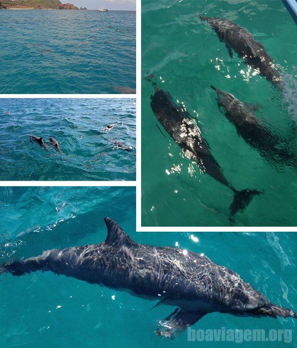 Mais e mais golfinhos acompanhando a embarcação