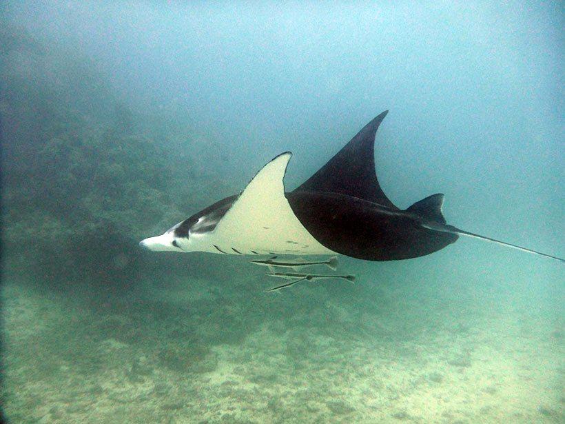 Momento de felicidade e emoção em mergulho na ilha de Bora Bora