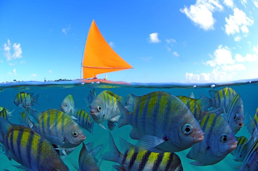Mergulho com snorkel em um mar repleto de peixinhos coloridos